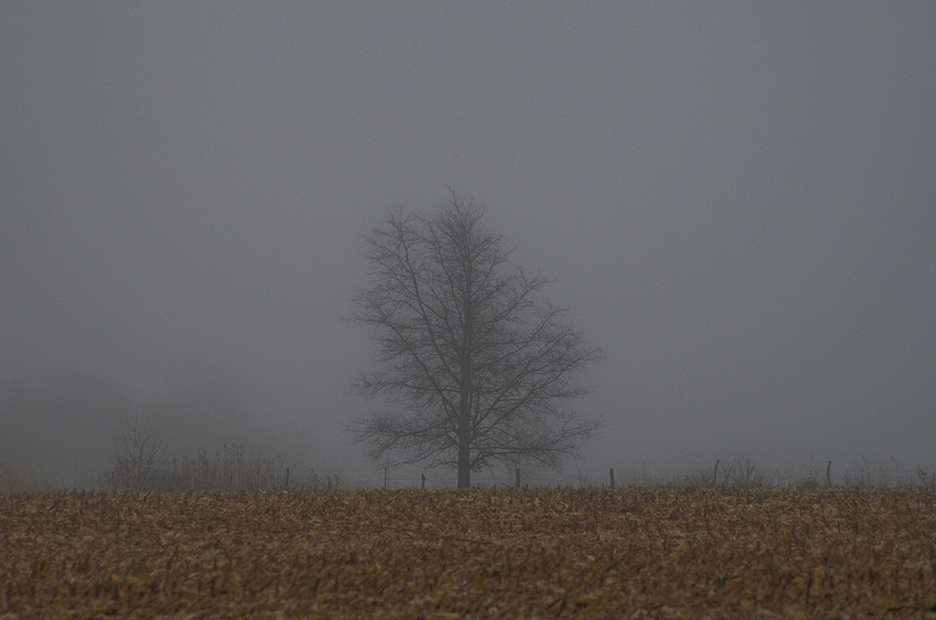 IMG2243_lonely_tree.jpg