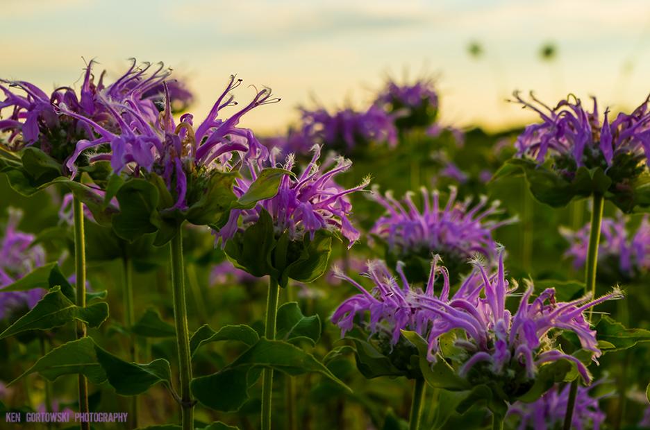 IMG5468_silver_springs_flowers.jpg